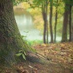 Piękny i {zadbany ogród to nie lada wyzwanie, przede wszystkim jak jego pielęgnacją zajmujemy się sami.